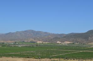 Ruta del Vino Views