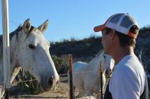 visiting rescue horses
