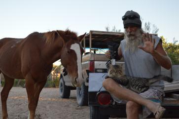 Earthquake, horse and cat.