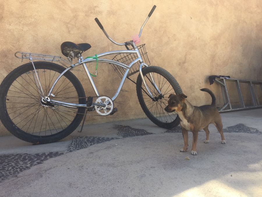 Mexican dog with beach cruiser
